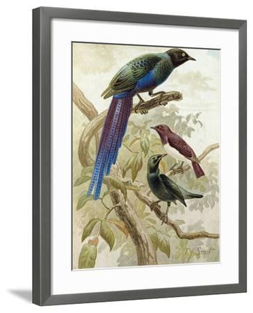 Glossy Starlings--Framed Giclee Print