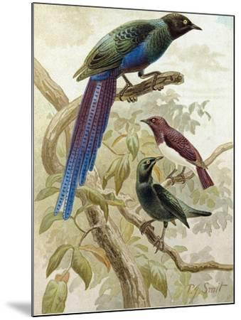 Glossy Starlings--Mounted Giclee Print