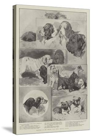 Sketches at the Kennel Club Show, Crystal Palace--Stretched Canvas Print