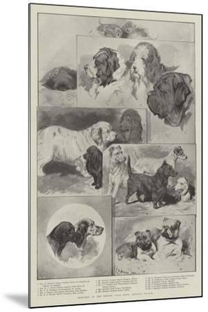 Sketches at the Kennel Club Show, Crystal Palace--Mounted Giclee Print