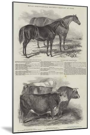 Royal Agricultural Society's Meeting, at York--Mounted Giclee Print