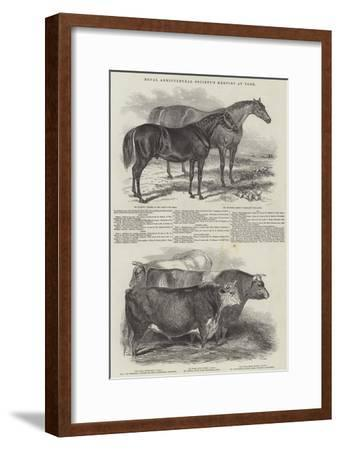 Royal Agricultural Society's Meeting, at York--Framed Giclee Print
