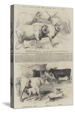Prize Animals from the Cattle Show, at Paris--Stretched Canvas Print