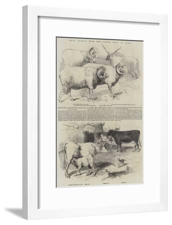 Prize Animals from the Cattle Show, at Paris--Framed Giclee Print