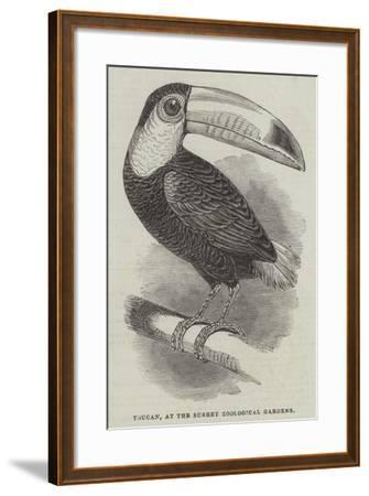 Toucan, at the Surrey Zoological Gardens--Framed Giclee Print