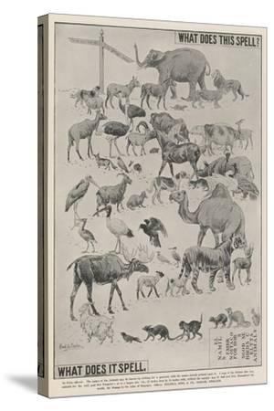 Advertisement, Ellimans Embrocation--Stretched Canvas Print