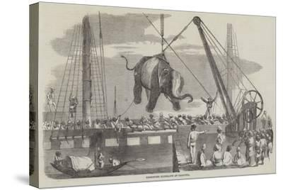 Unshipping Elephants at Calcutta--Stretched Canvas Print