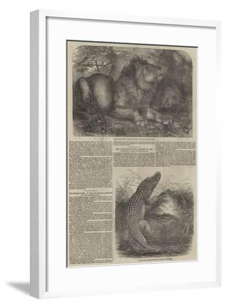 Wildlife at London Zoo--Framed Giclee Print