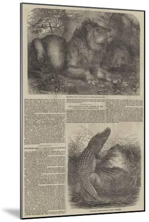 Wildlife at London Zoo--Mounted Giclee Print