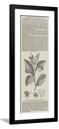 The Deadly Night-Shade, (Atropa Belladonna)--Framed Giclee Print