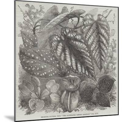 December Flowers, from The Illustrated London Almanack for 1856--Mounted Giclee Print