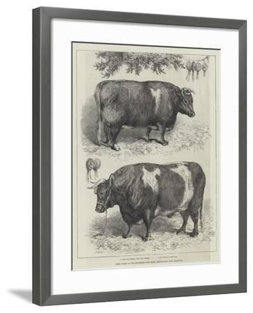 Prize Cattle at the Smithfield Club Show, Agricultural Hall, Islington--Framed Giclee Print