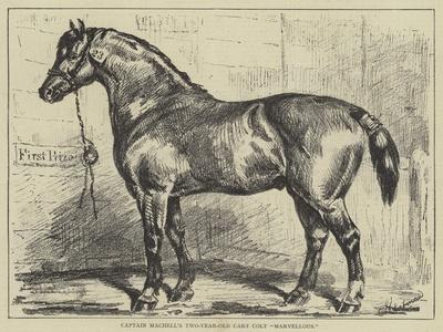 Captain Machell's Two-Year-Old Cart Colt Marvellous--Framed Giclee Print
