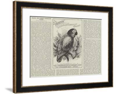 Advertisement, Deacon, the Famous Australian Parrot--Framed Giclee Print