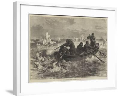 Arctic Sketches from the Pandora, Catching a Young Bear--Framed Giclee Print
