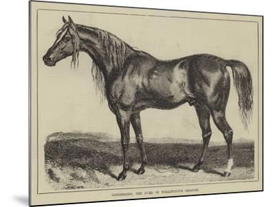 Copenhagen, the Duke of Wellington's Charger--Mounted Giclee Print