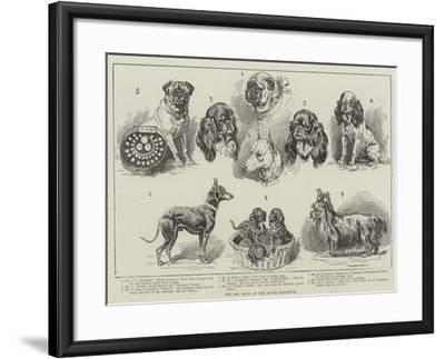 Toy Dog Show at the Royal Aquarium--Framed Giclee Print
