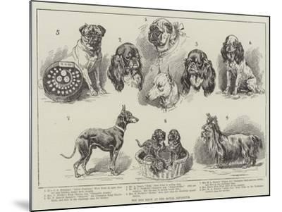 Toy Dog Show at the Royal Aquarium--Mounted Giclee Print