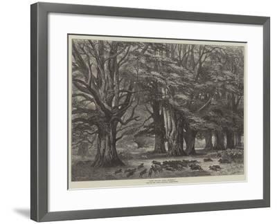 Bushy Brattley During Beechmast--Framed Giclee Print