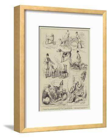 The Hound Show at Peterborough--Framed Giclee Print