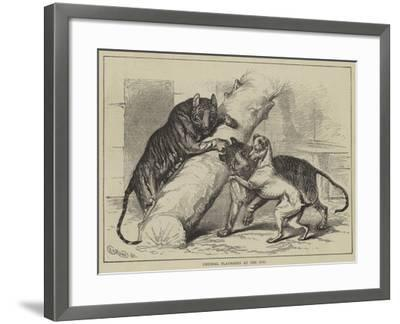 Unusual Playmates at the Zoo--Framed Giclee Print