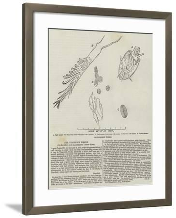 The Tingewick Fossils--Framed Giclee Print
