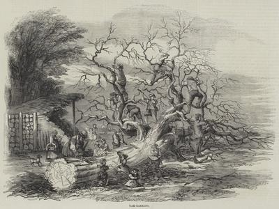 Oak-Barking--Framed Giclee Print