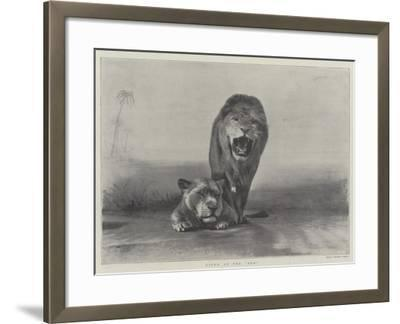 Lions at the Zoo--Framed Giclee Print