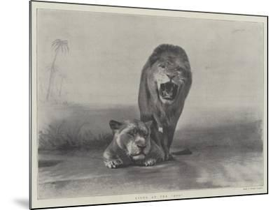 Lions at the Zoo--Mounted Giclee Print
