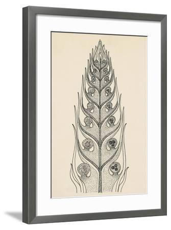 Cross-Section of Selaginella Spikemoss--Framed Giclee Print