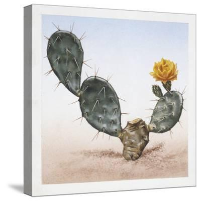 Indian Fig Opuntia (Opuntia Ficus-Indica)--Stretched Canvas Print