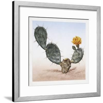 Indian Fig Opuntia (Opuntia Ficus-Indica)--Framed Giclee Print