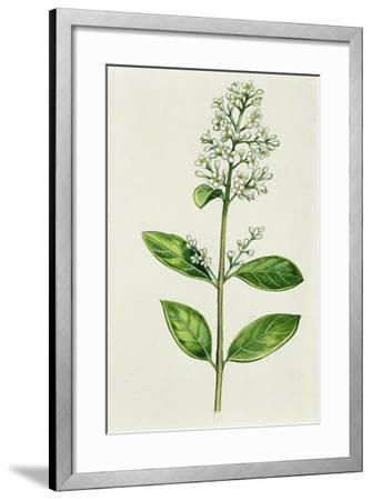 Inflorescence Corncob--Framed Giclee Print