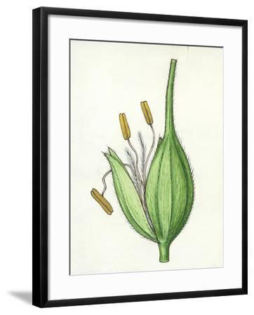 Botany, Poaceae or True Grasses, Scheme of the Flower--Framed Giclee Print