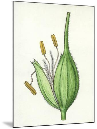 Botany, Poaceae or True Grasses, Scheme of the Flower--Mounted Giclee Print