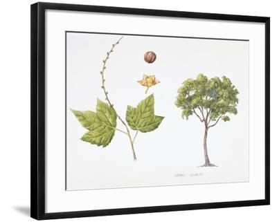 Croton Goudotii Plant with Flower, Leaf and Fruit--Framed Giclee Print