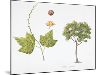 Croton Goudotii Plant with Flower, Leaf and Fruit--Mounted Giclee Print