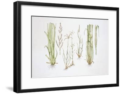 Graminaceae, Weed--Framed Giclee Print