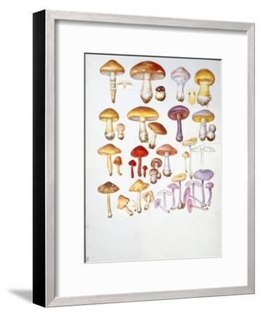 Mushrooms--Framed Giclee Print