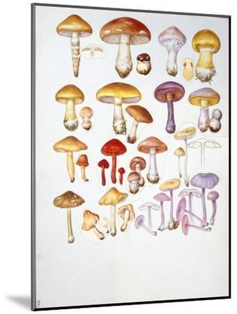 Mushrooms--Mounted Giclee Print