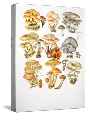 Mushrooms--Stretched Canvas Print