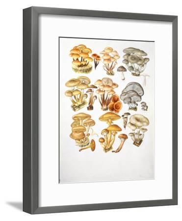 Mushrooms--Framed Giclee Print