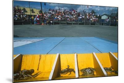 Crab Race, Crisfield Hard Crab Derby Festival, Eastern Shore, Maryland--Mounted Photographic Print