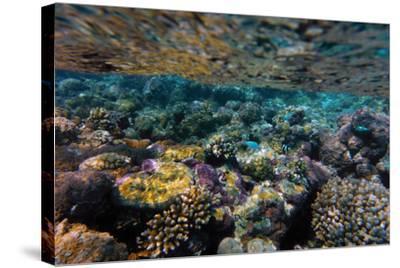 Aitutaki, Cook Island, Polynesia, South Pacific Ocean--Stretched Canvas Print