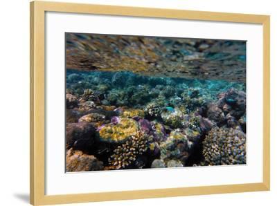 Aitutaki, Cook Island, Polynesia, South Pacific Ocean--Framed Photographic Print