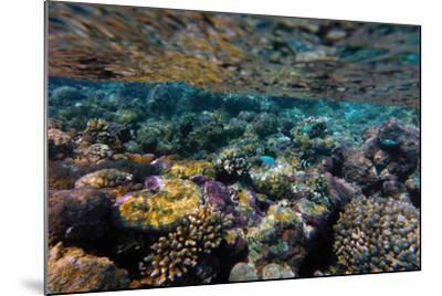 Aitutaki, Cook Island, Polynesia, South Pacific Ocean--Mounted Photographic Print