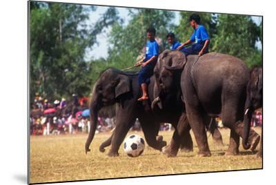 Elephants Playing Soccer, Elephant Round-Up, Surin, Thailand--Mounted Photographic Print