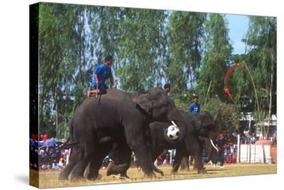 Elephants Playing Soccer, Elephant Round-Up, Surin, Thailand--Stretched Canvas Print