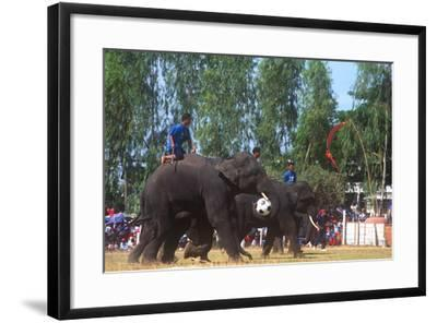 Elephants Playing Soccer, Elephant Round-Up, Surin, Thailand--Framed Photographic Print