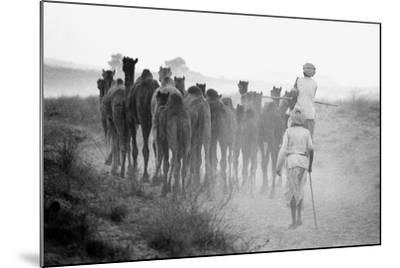 Herd of Camels, Pushkar Fair, Rajasthan, India, 1976--Mounted Photographic Print